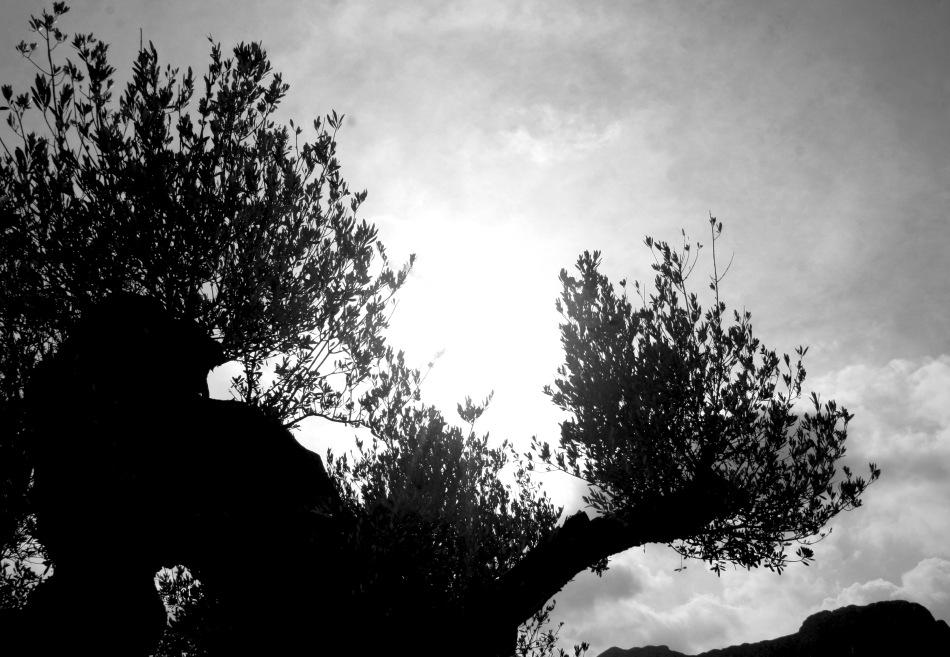 Señorío de Relleu - Aceite de Oliva Oliva Virgen de Alicante - Oleoturismo